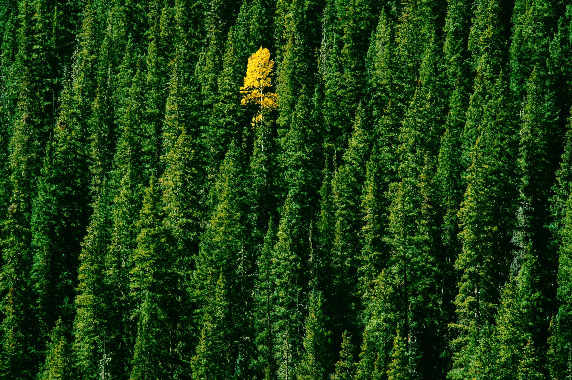 Greenwashing, Flugscham und CO2-Kompensation: Sieben Vorurteile über Nachhaltigkeit im Check